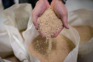 334682_779014_abiarroz_brazilian_rice_industria_arroz__45__web_